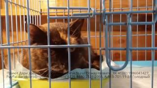 Кошачий приют в Новосибирске | Cat shelter in Novosibirsk