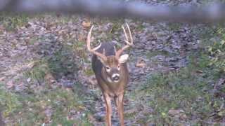 Giant Buck Feaver!!!