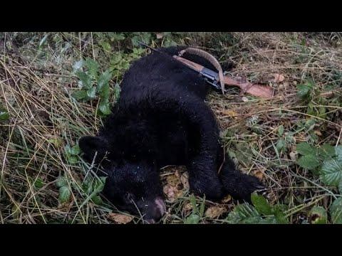 Washington Bear Hunt 2019