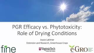 PGR Efficacy vs Phytotoxicity: The Role of Drying Conditions