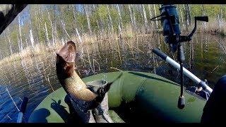 Рыбалка на лесном озере. Ловля щуки на незацепляйку Kuusamo