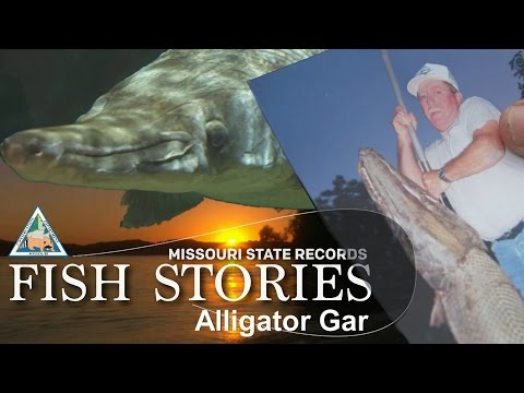 Missouri Record Fish Stories – Alligator Gar