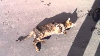 Pretty kitty wanna sex / Милая кошечка хочет любви и ласки