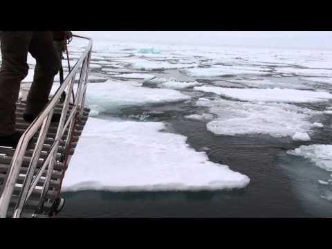 Gedania zatrzymana przez lody Arktyki