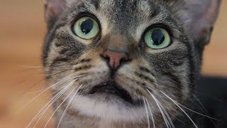 How Not to Make Your Cat Internet Famous   Mashable