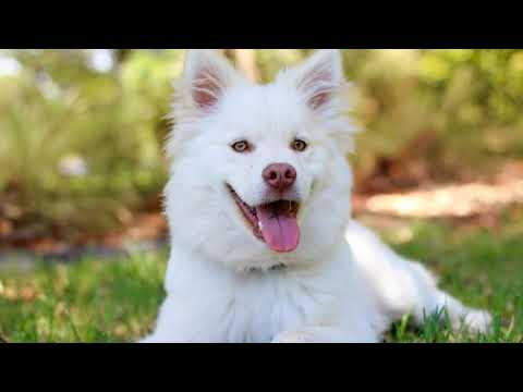 Adorable and Funniest Dogs Ever