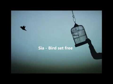 Sia - bird set free sub español