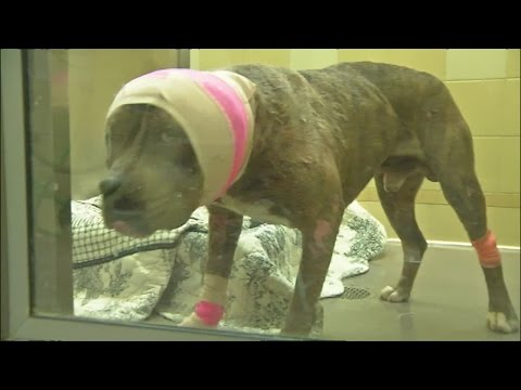 Bubba G Improving At Denver Animal Shelter