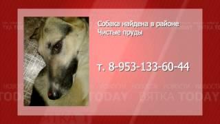 Найдена собака 03.10.13 Вятка Today