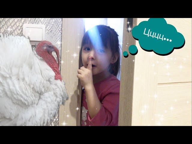 Индюки в Доме//Своя ферма//Kids Like Ludmila