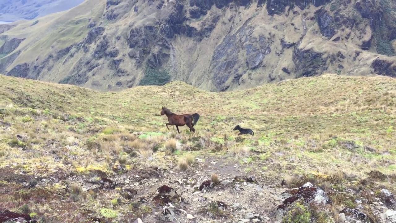 Hutan trpos Andes yang Rusak karena Perubahan Iklim
