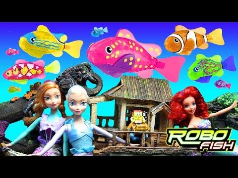 Ragdoll cat vs zuru robo turtle robo fish poathtv for Swimming fish cat toy