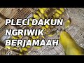 Pleci Dakun Ngriwik Berjamaah  Mp3 - Mp4 Download