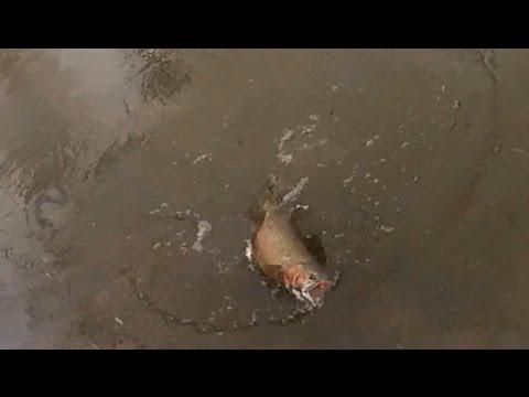 Lake ontario center pin fishing winter gopro 12 27 11 for Center pin fishing