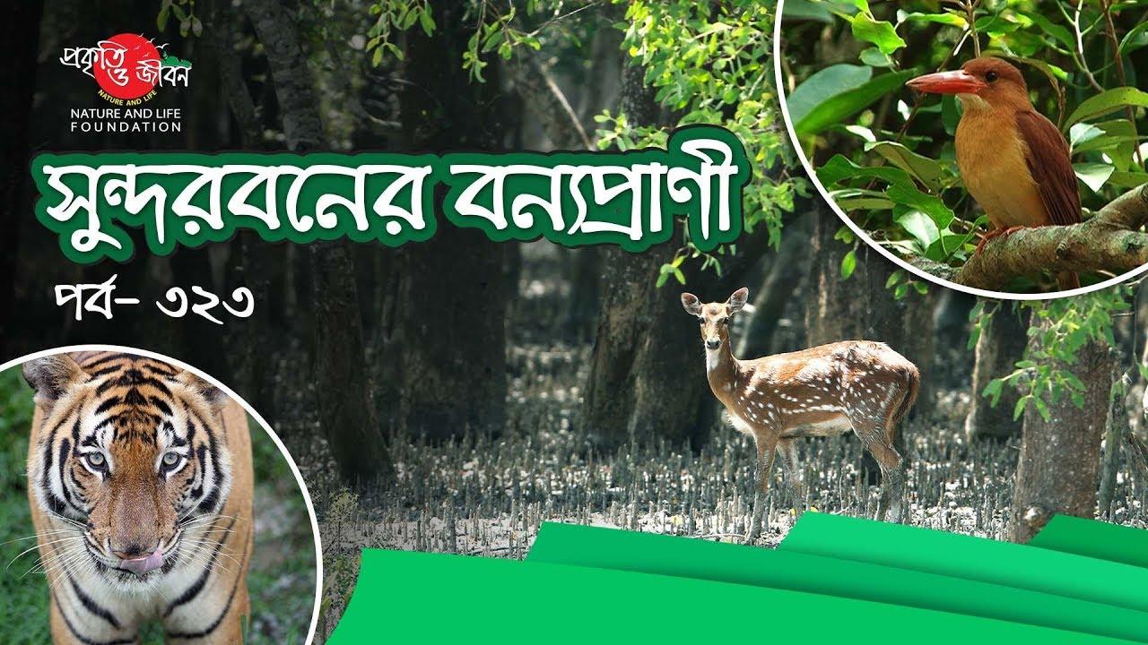 সুন্দরবনের বন্যপ্রাণী (Wildlife of The Sundarbans)_POJF_EP-323
