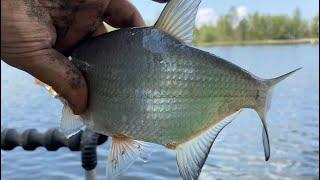 На реке со штекером экстремальная рыбалка