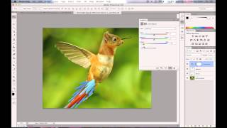 Photoshop - Hybrid Animal