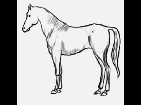 How To Draw A Horse At Nasıl çizilir Youtube