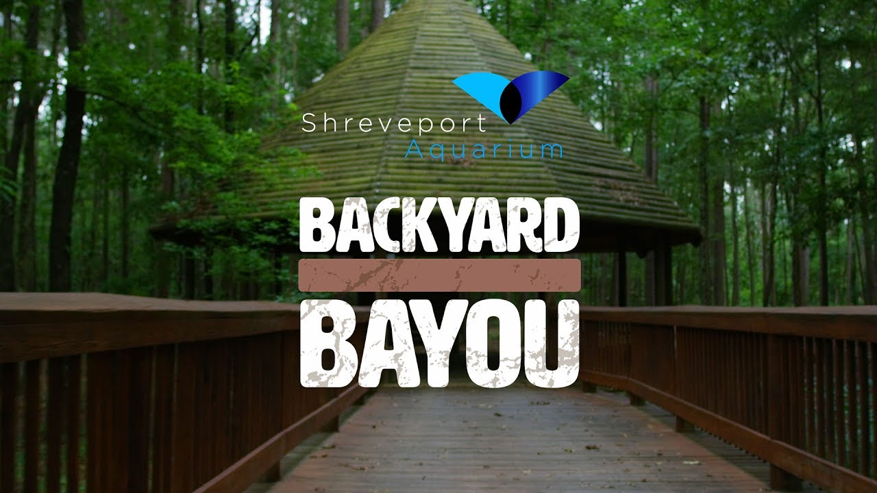 shreveport aquarium 39 s backyard bayou chimp haven youtube