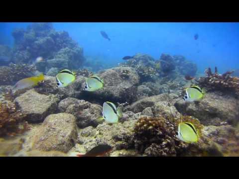 Snorkeling Panama's Colorful Reefs