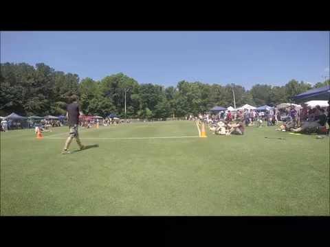 Dog Days of June - Metro Bond Park - Cary NC - Skyhoundz Championship