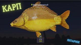 Русская рыбалка 4 РР4 озеро Янтарное КАРП Russian fishing 4 РР4 lake Amber KARP FARM