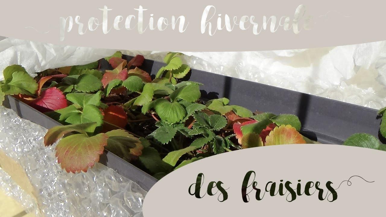 Comment Entretenir Les Fraisiers En Automne comment protéger les fraisiers en pot du froid