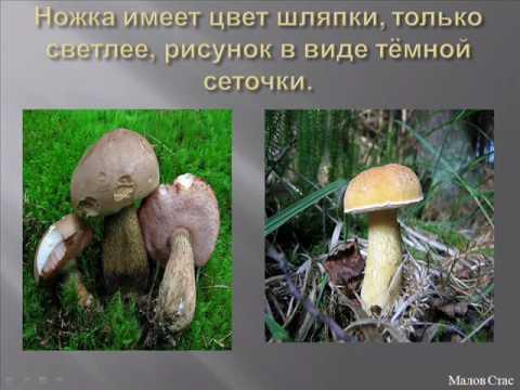 Общая характеристика грибов.Биология 5 класс.