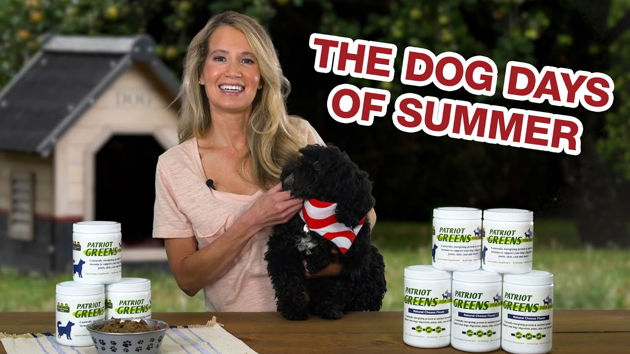 How to Prepare for the Dog Days of Summer