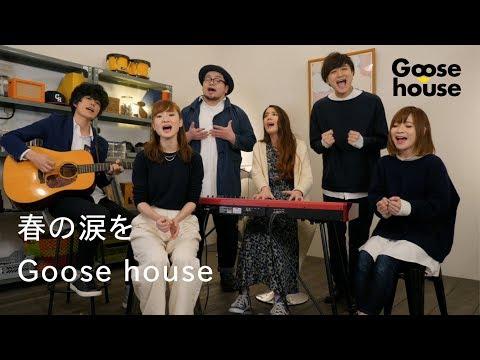 春の涙を/Goose house(歌詞付き)