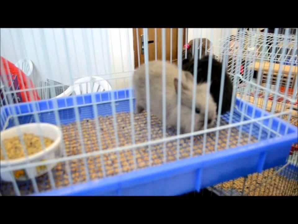 Отпугиватель мышей в воронеже - YouTube