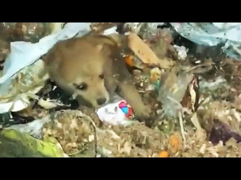 Puppy Rescued From Garbage Truck