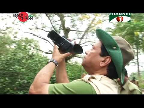 Nature and Life - Episode 248 (Sundarbans South Wildlife Sanctuary)