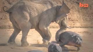 Cuando el elefante se enfada II