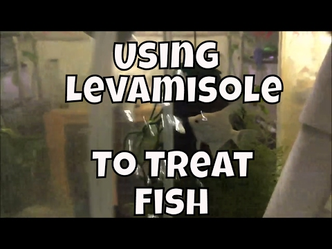 Using Levamisole to treat fish Fish Room update Water Changes in fish tanks