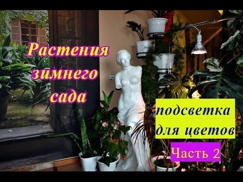 Фитодизайн - Студия Александра Мельникова Фитодекор