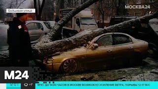 Несколько деревьев рухнули на припаркованные машины на востоке Москвы - Москва 24