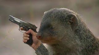 Когда мангусты атакуют