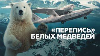 От Ямала до Таймыра: как в Арктике проходит «перепись» белых медведей