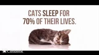 Repeat youtube video 45 Facts about Cats