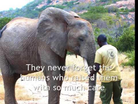 Elephant Orphans of Kenya ~ Ithumba