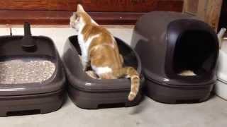 猫ってやはりトイレは教えなくてもわかってくれるものなのですね。 完全...