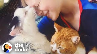 What Happens After You Rescue A Cat | The Dodo