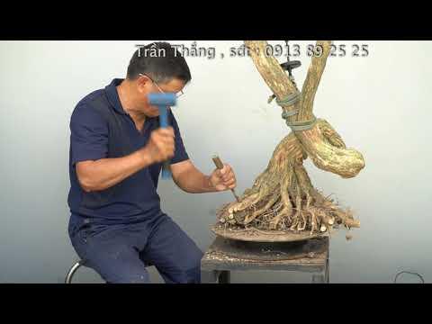 BONSAI CHO MỌI NGƯỜI ( TẬP 22 )|TRẦN THẮNG OFFICIAL : Định hướng xây dựng bonsai ở giai đoạn đầu.