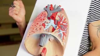dohányzáskor fáj a jobb tüdő a dohányzásról való leszokás veszélye