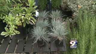 In the Garden: Evergreen Plants