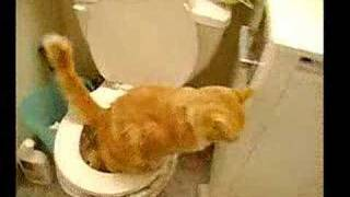 Cat on the Toilet! Toilet training Picnic