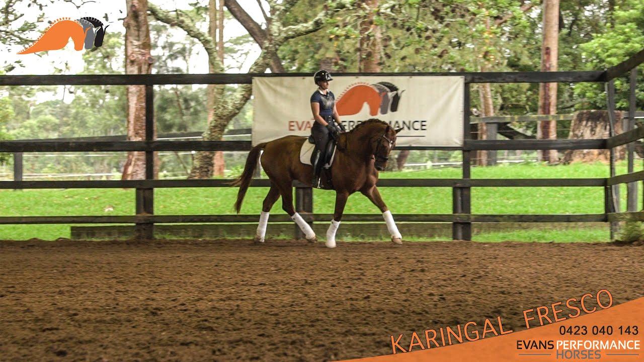 Sport Horse Films Australia - HORSE FOR SALE VIDEO - Karingal Fresco Fanta