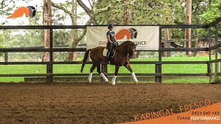Sport Horse Films Australia - HORSE FOR SALE VIDEO - Karingal Fresco Fanta
