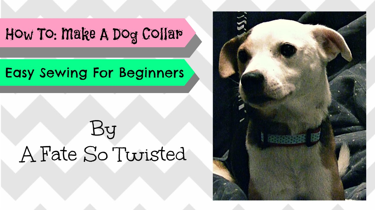 How to dog collar sewing for beginners youtube how to dog collar sewing for beginners jeuxipadfo Gallery
